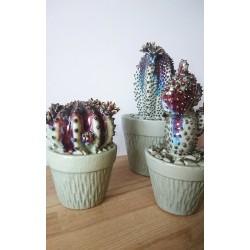 Cactus en pot en grès...