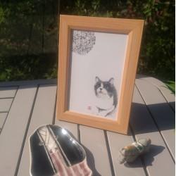 shôdo et chat