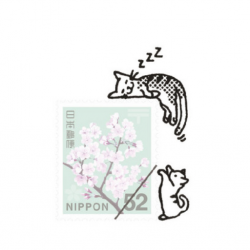 Chat endormie