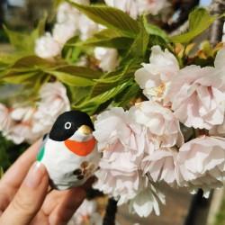Uso bird Ichinomiya hariko