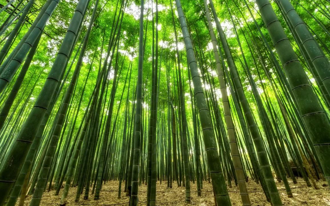 awaji bamboo encens japonais awaji island koh shi