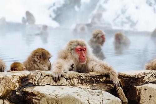 singe bain bien être japon onsen chaud parfum ambiance